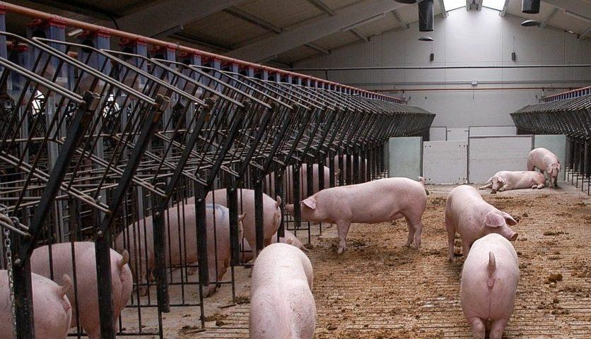 Derecho agroalimentario